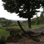 Hammock in Garden Area