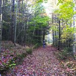 This is the trail to the sky loft.  A red carpet during foliage season !