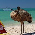 Emu on the beach!