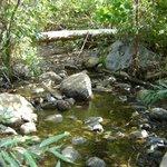 the water creek