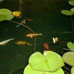 Peaceful zen pond