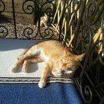 Tumbonas en el jardín con los gatitos trepando por los melocotoneros