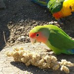 They love the millet!