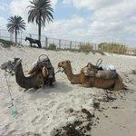 beach transport....