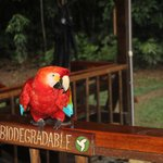 Visit from a friendly macaw