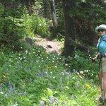 Sun Peaks alpine flowers