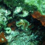 Beatyful sea worms