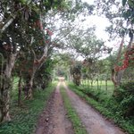 Road path towards town from the Hacienda