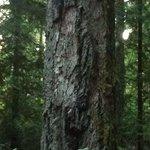 Camp sight tree