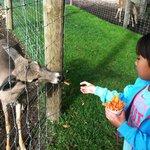 Feed the deer.