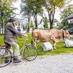 Downtown Garmisch I saw this farmer walking his cow.