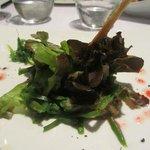 Timbal de judias verdes, algas y vinagreta de grosellas