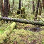 Lunch Falls Trail