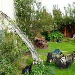Whale garden