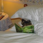 """Torquil """"looks after guests"""" in the Tobermory Room. He enjoys Scottish literature and lore."""