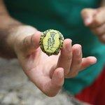 una tortuga del cenote