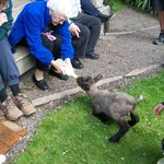 feeding one of the lambs