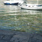 I spent many hours in the shde, watching the boats and people in the old harbour