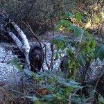 Mama bear watching us