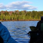 Watching a moose from the shadows, in our canoes