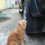 Sala the cat
