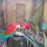 Aves muy coloridas por doquier