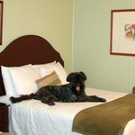 Two Paws up for Pet Friendly Rooms!