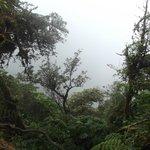 foret de nuage monteverde