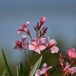 jolie fleur sur la terasse