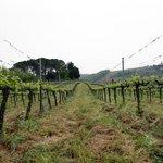 Weinanbau in direkter Nähe