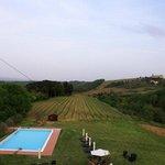 Blick auf den Weinanbau
