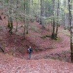 Paseo por la Selva de Irati