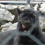 il gattino nero ;)