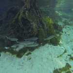 Fish in 3 Sister Springs