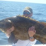 Goliath Grouper 70lb plus ( tagged and released )