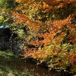 An autumn walk down to Mill Gill & the waterfalls of Askrigg