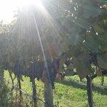 Kalala Vines make GREAT Kalala wines!