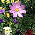 Amazing flowers EVERYWHERE!