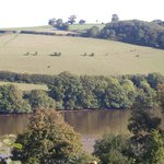 Some wild swimmers spotted in the River Dart from Sharpham Wine & Cheese