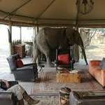 Photo of Wilderness Safaris Ruckomechi Camp