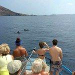 delfines en aquabus