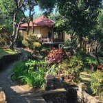 Palm House villa