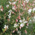 Smithsonian Butterfly Habitat Garden (detail)
