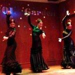 Flamenco in Parasol Garden