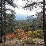 Mount Falcon Castle Trail