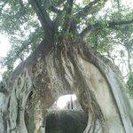 árbol sobre muro