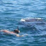 So close! Whale-shark!