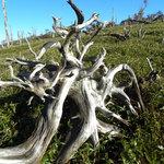 枯れ木と笹の高原