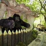 Il mitico Safari