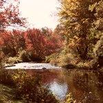Little River's back garden...